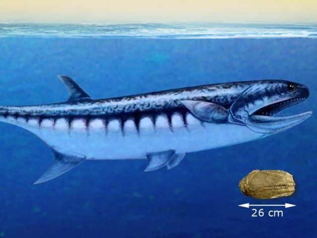 Scientists find fossil of shark-like ancient sea creature